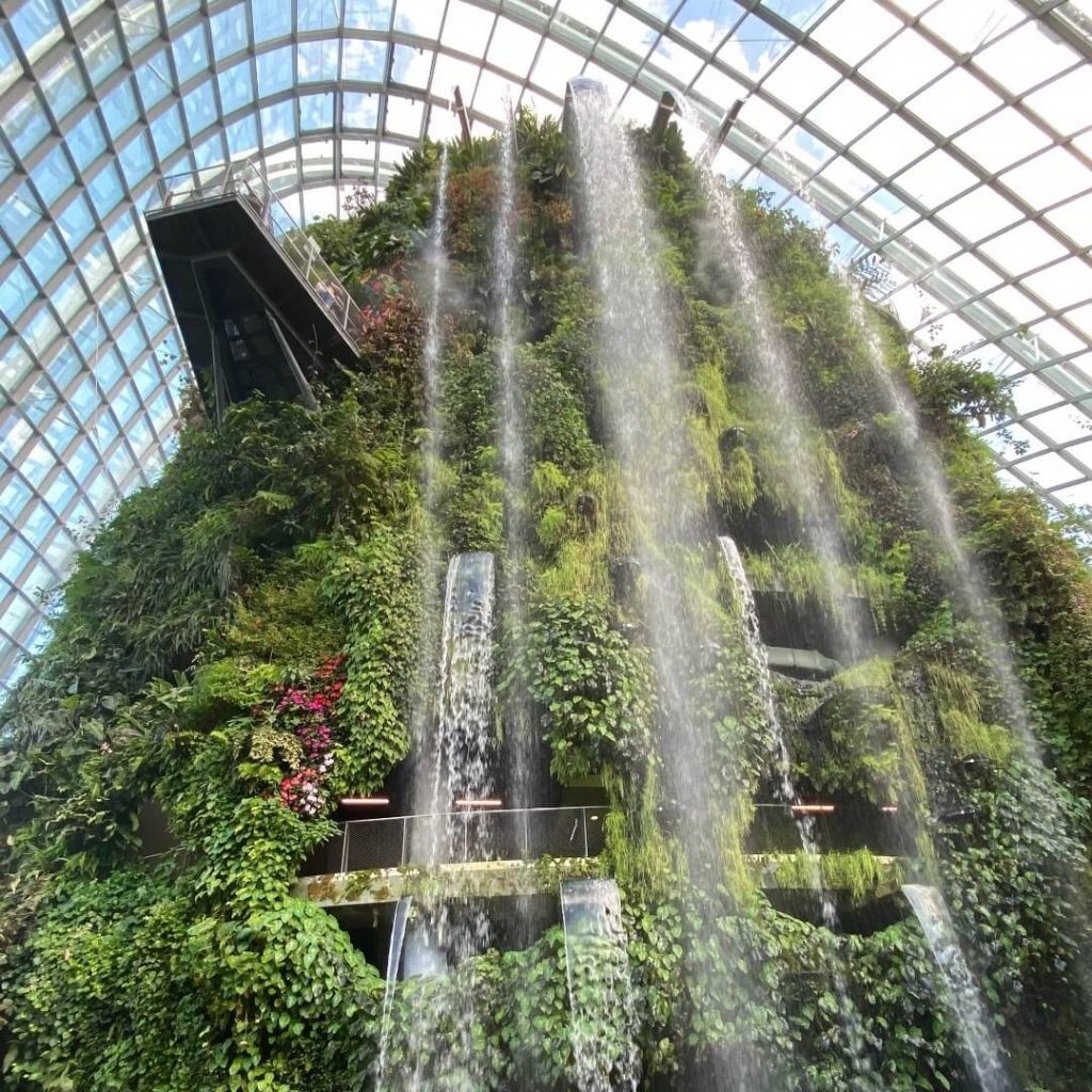 Cloud forest fountain